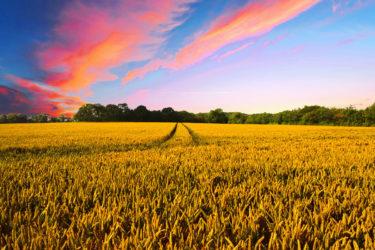 ドローンを使った農薬散布とは?人手不足の切り札